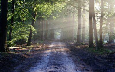 Lubuszanie wędrują szlakiem świętego Jakuba